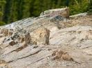 Chipmunk (Streifenhörnchen)