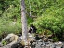 Schwarzbär mit Lachs